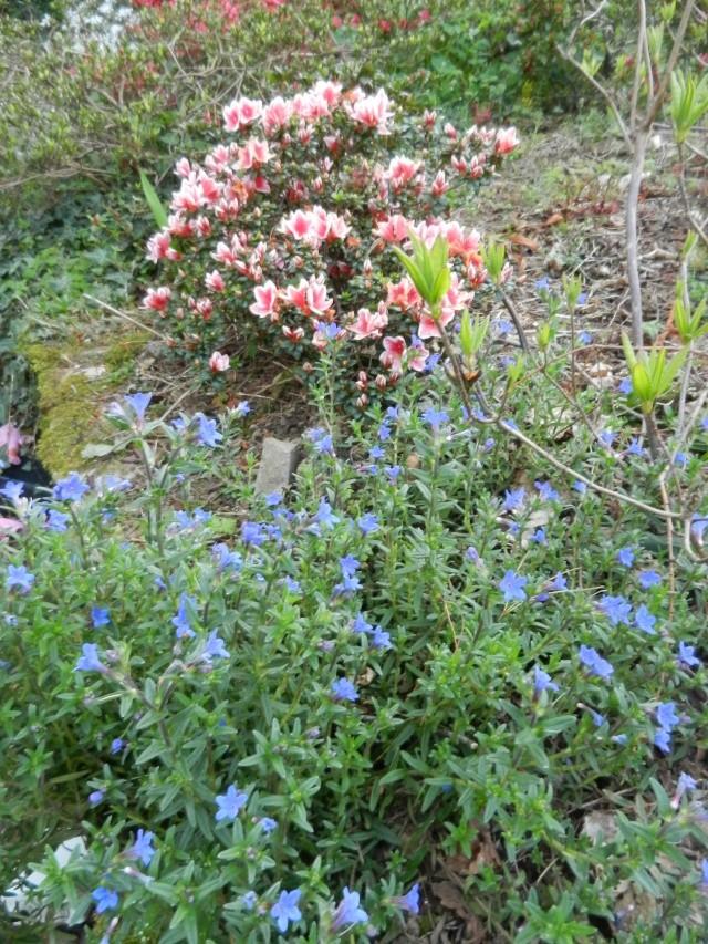 Aperçus de mon jardin Breton - Page 5 Vue_du17