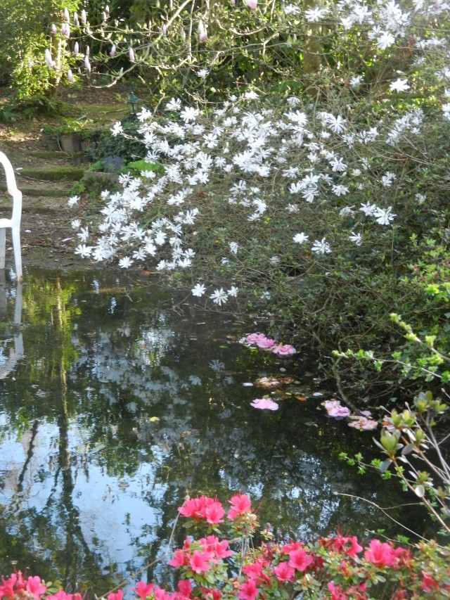 Aperçus de mon jardin Breton - Page 5 Vue_du19