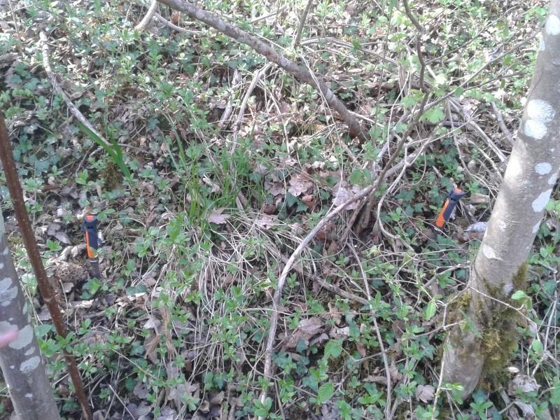 Les champignons , ( girolles , cèpes , morilles ) etc ...  - Page 23 20140426