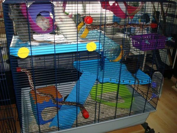 Freddy 2 Max - SUISSE - pour rats et pas que ^^ 214p6v10