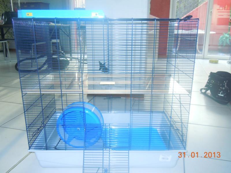 Freddy 2 Max - SUISSE - pour rats et pas que ^^ Dscn8210
