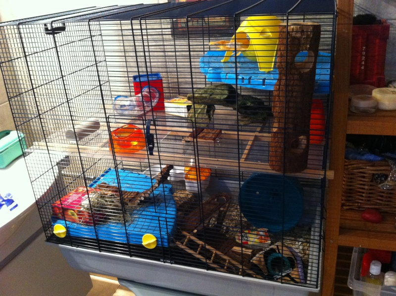 Freddy 2 Max - SUISSE - pour rats et pas que ^^ Img_2612