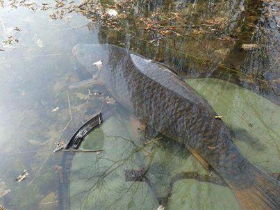 Les fishs pris au Domaine de la Longère 10008510