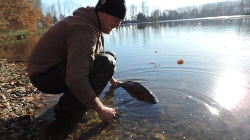 Les fishs pris au Domaine de la Longère 19799510