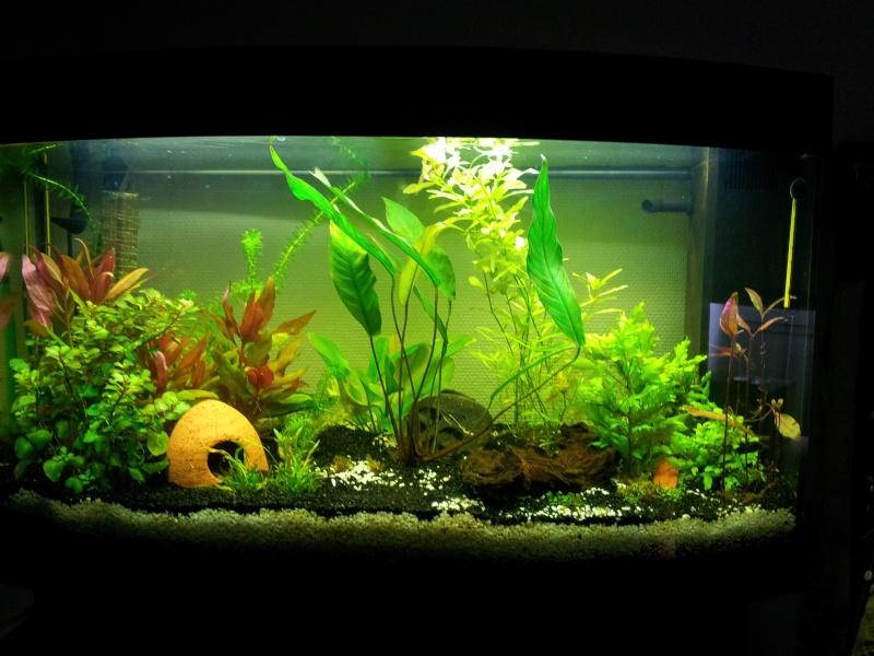 Mon aquarium de 180 litres 20140410