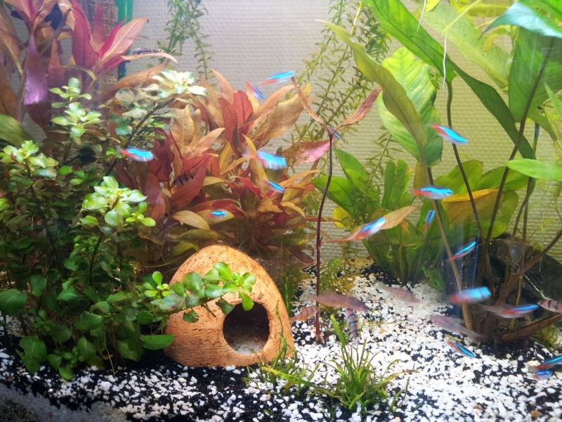 Mon aquarium de 180 litres 20140510