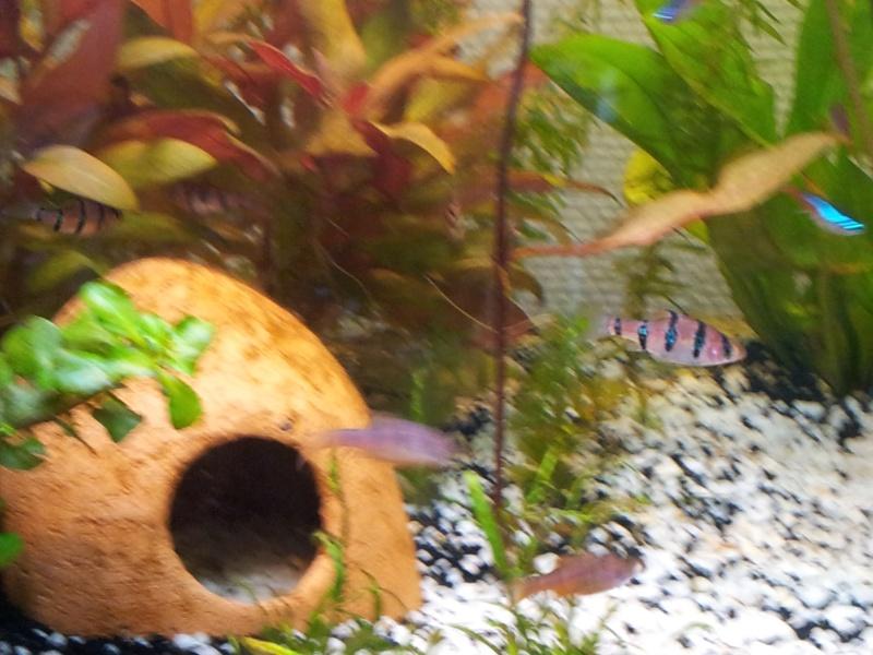 Mon aquarium de 180 litres 20140511