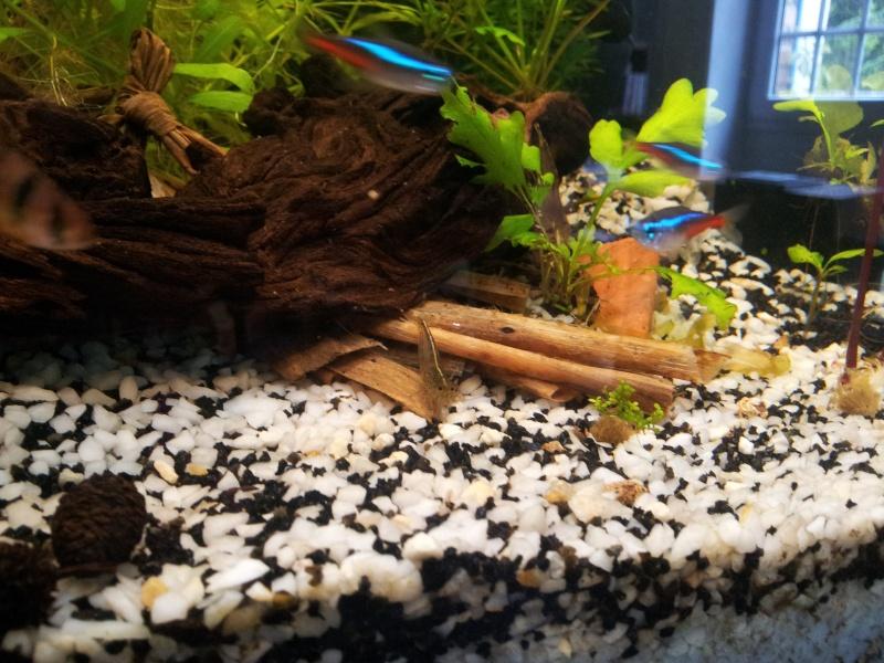 Mon aquarium de 180 litres 20140514