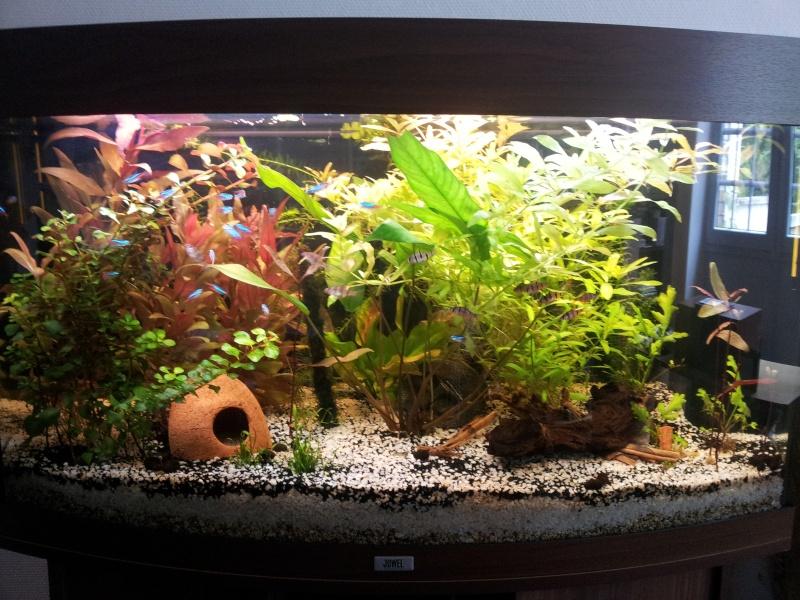 Mon aquarium de 180 litres 20140515