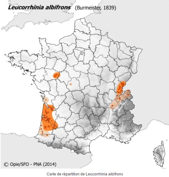 Groupe entomo du pays de Rennes : découverte d'une Leucorrhine à front blanc (Leucorrhinia albifrons) Carte_15