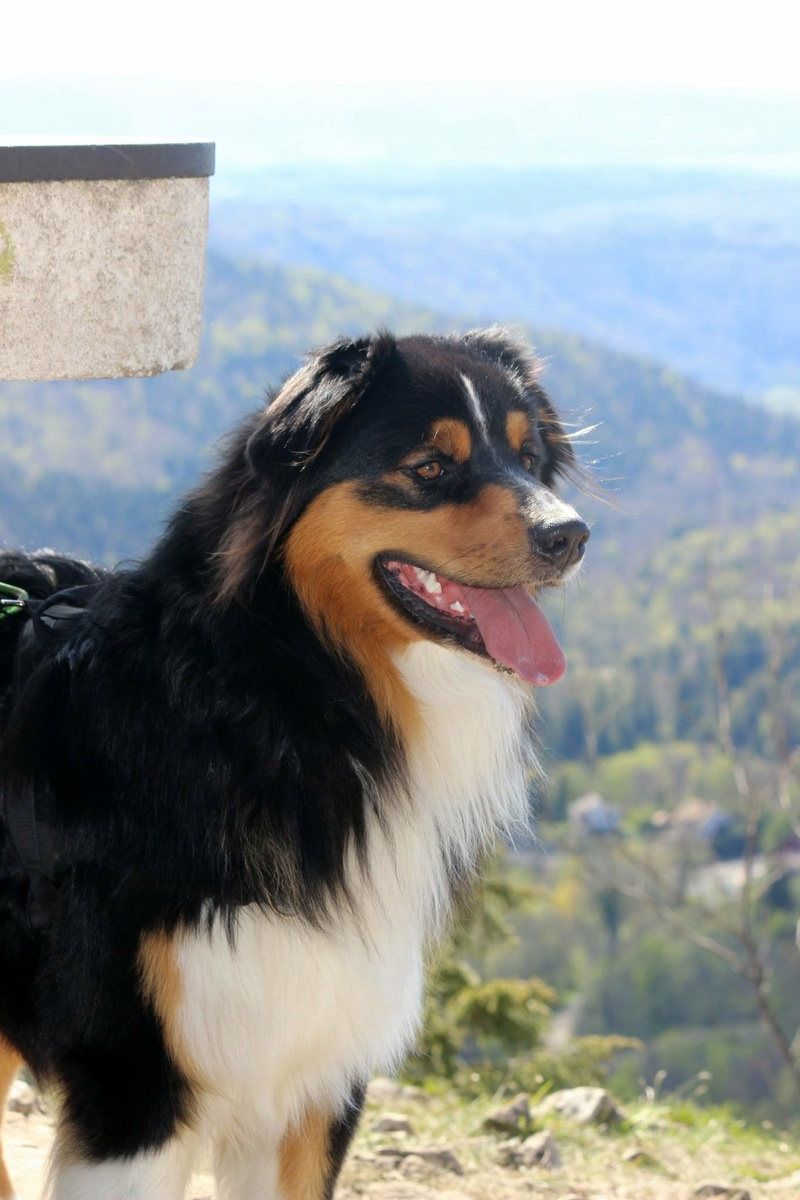 Marley • chien Img_8410