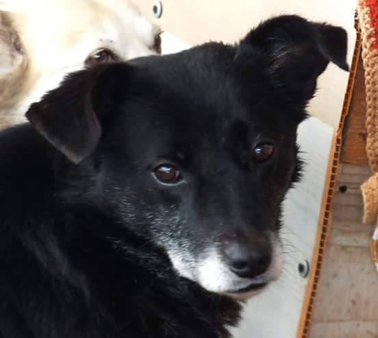BULI (ex TZUMPI), mâle croisé labrador né en 2010 - en FA à Pascani - Adopté PAR SYBILLE (depart67) 17392910