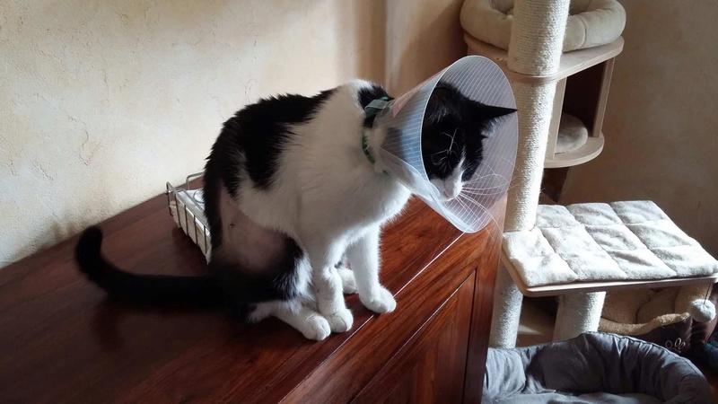 LILOU -  chat femelle, née en août 2015, chez Alina - en FA chez Sabine (dpt77) - décédée 17838310