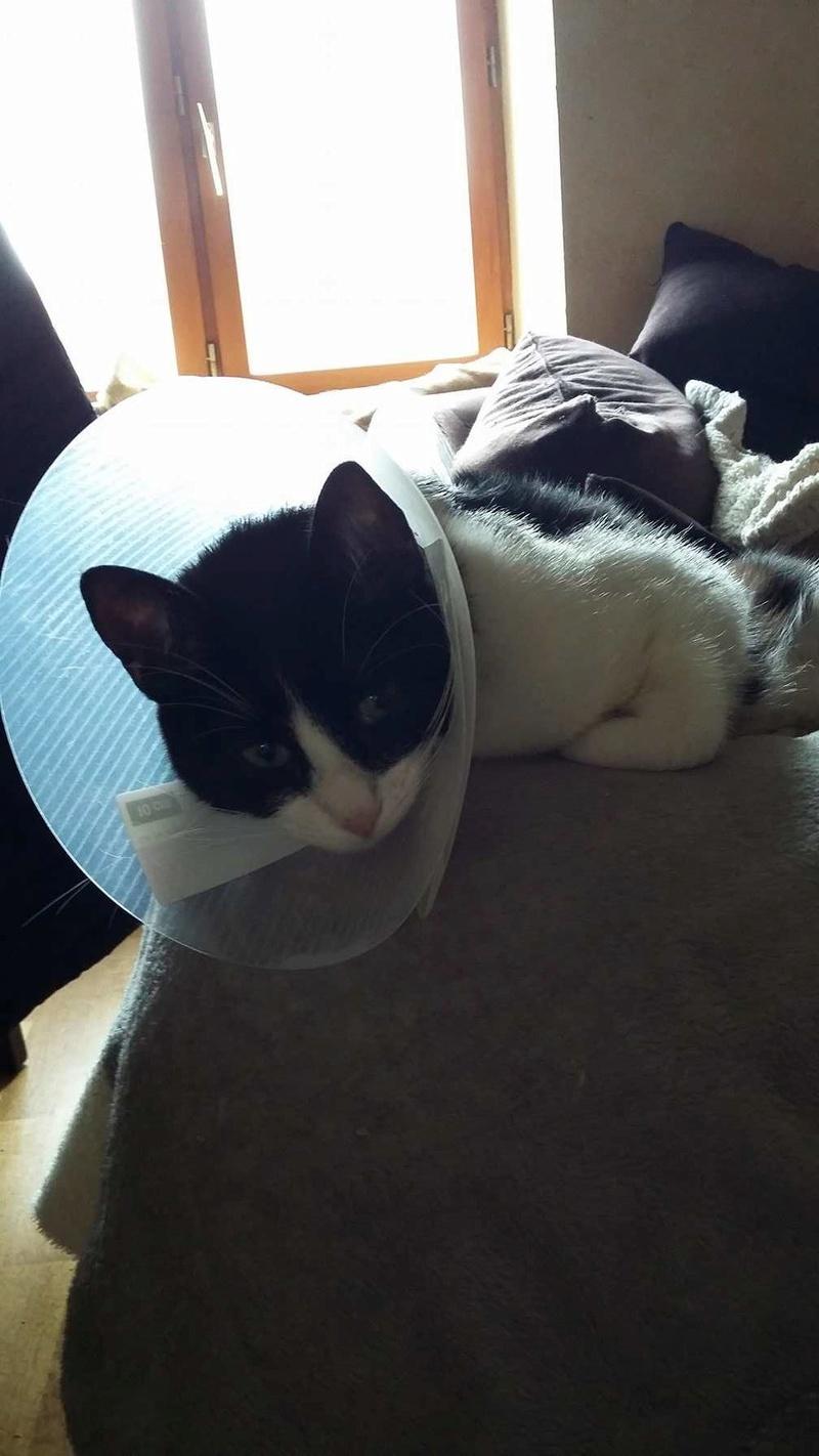 LILOU -  chat femelle, née en août 2015, chez Alina - en FA chez Sabine (dpt77) - décédée 17838610
