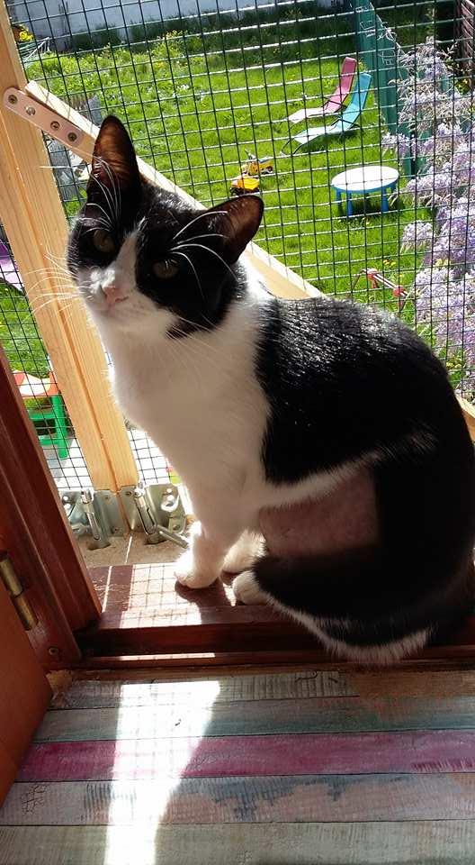 LILOU -  chat femelle, née en août 2015, chez Alina - en FA chez Sabine (dpt77) - décédée 17888910