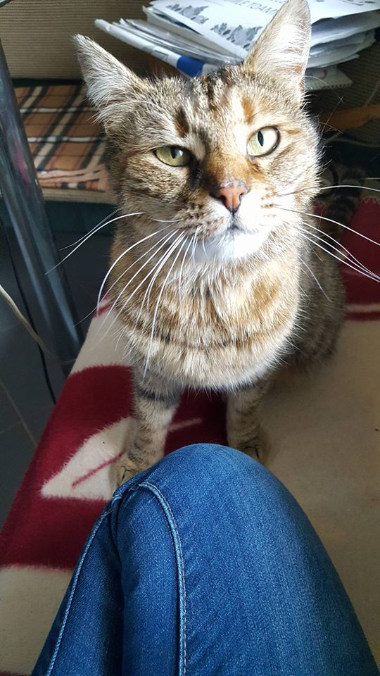 CHLOE, chatte femelle née env 2015 - Adelina (Iasi) - adoptée par mimipepsimaya (75) Chloe10