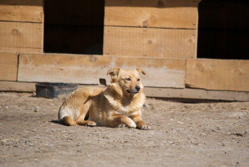 CONFETTI - femelle croisée de taille petite à moyenne, née environ 2013 - Adoptée par Elisabeth (68) - DOIT CHANGER DE FAMILLE ! Confet12