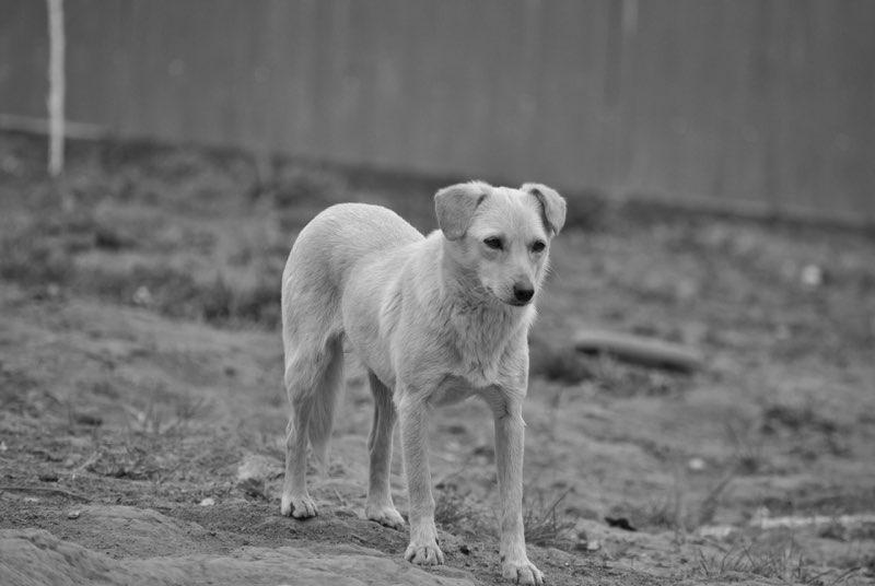 FEELING - femelle croisée labrador taille petite à moyenne née environ avril 2015 - REMEMBER ME LAND - Adoptée par Magali (68) Feelin11