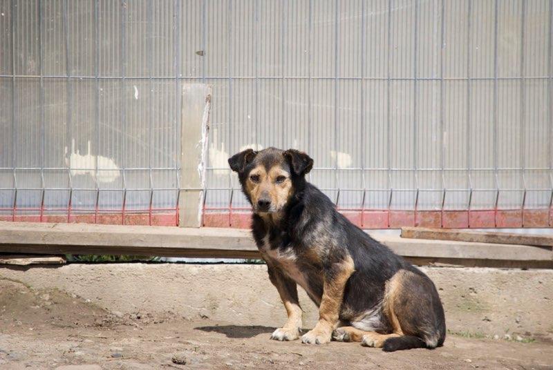 HATSU, mâle croisé, né en 2006, petite taille (Pascani)- adopté par Trish (30)- décédé  - Page 2 Hatsu12