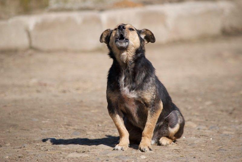 HATSU, mâle croisé, né en 2006, petite taille (Pascani)- adopté par Trish (30)- décédé  - Page 4 Hatsu310