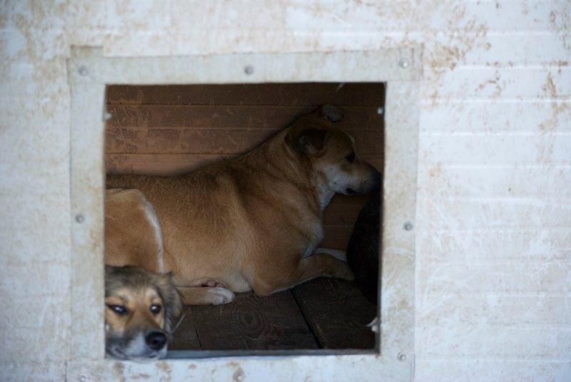 MAIKA - chienne croisée de taille moyenne, née 2015 - (Pascani) REMEMBER ME LAND Maika10
