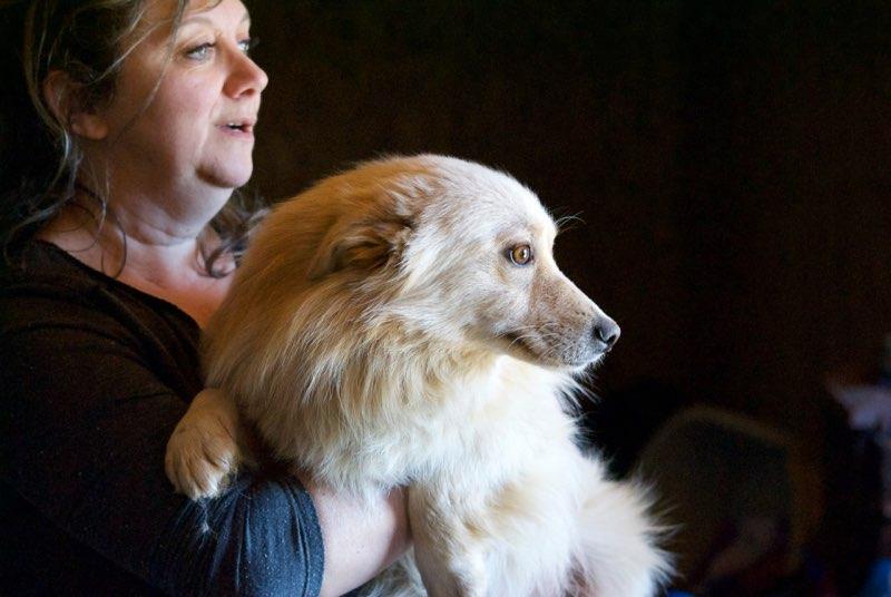 BENJI (ex ESTEREL) - mâle croisé petite taille né env 2015 - en FA chez Colette (Belgique) - adopté par Lila (30)  Myster13