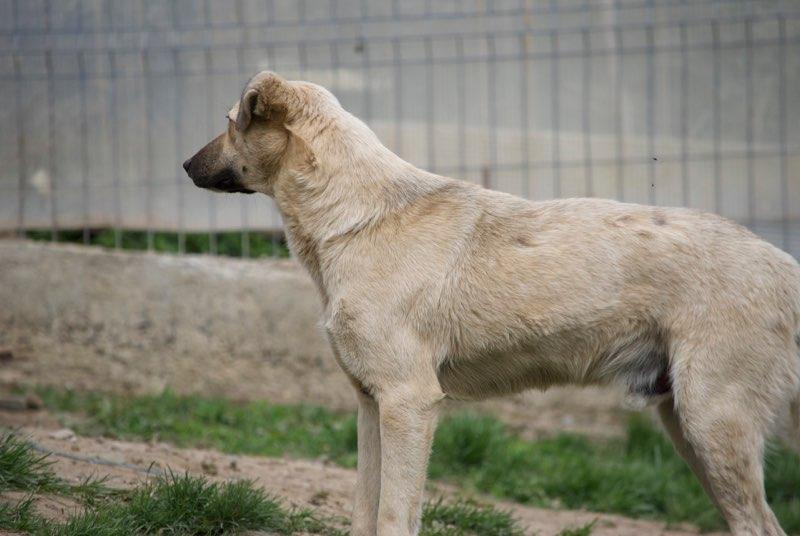 TANN - mâle, croisé, né en 2013, taille moyenne - REMEMBER ME LAND- décédé  Tann111