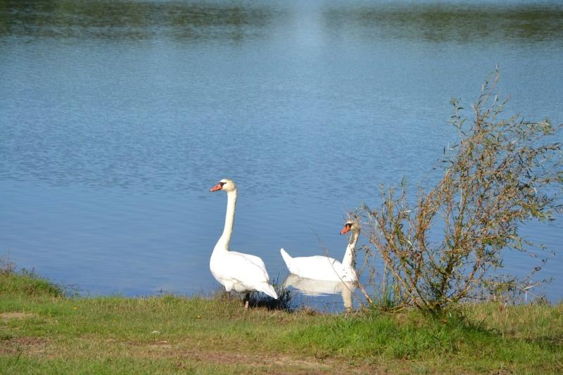 petite balade au lac de Gurson 12771410