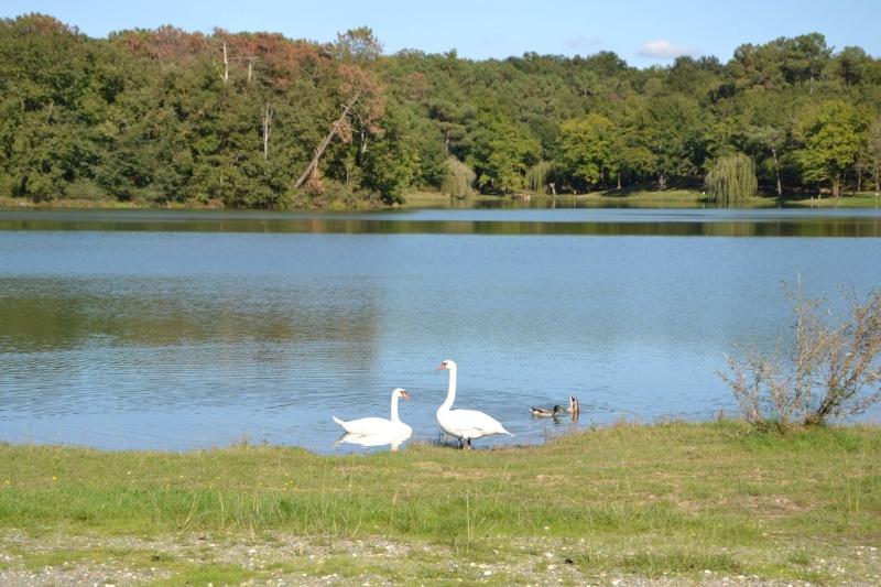 petite balade au lac de Gurson 12929810