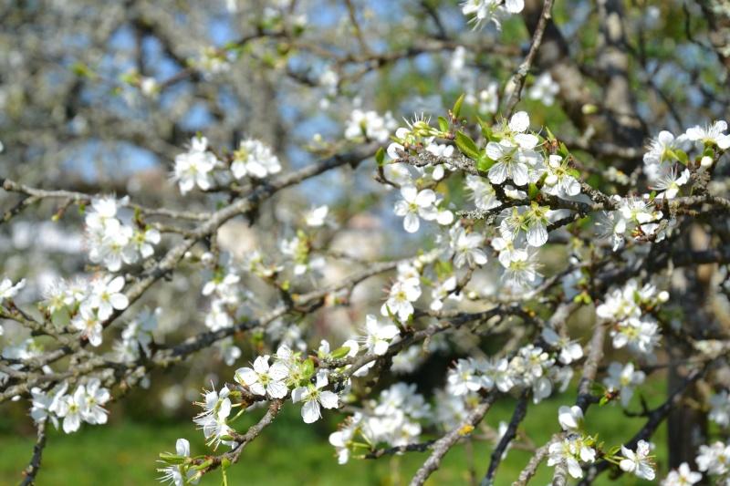 c'est aujourd'hui le printemps!!! Dsc_0510