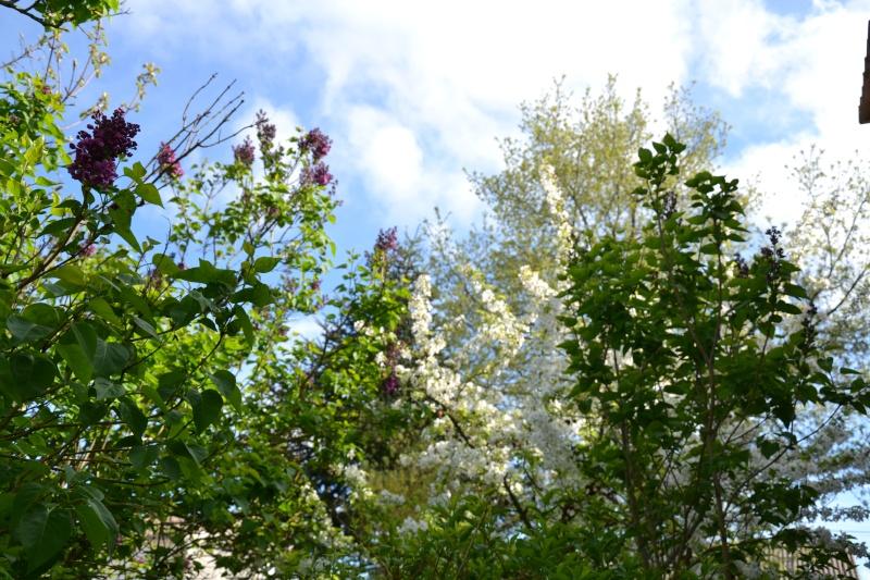 c'est aujourd'hui le printemps!!! Dsc_0522