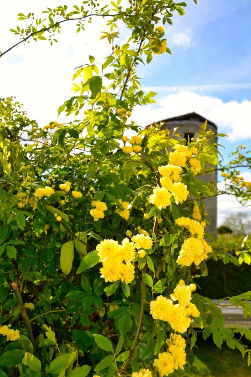 c'est aujourd'hui le printemps!!! Dsc_0527