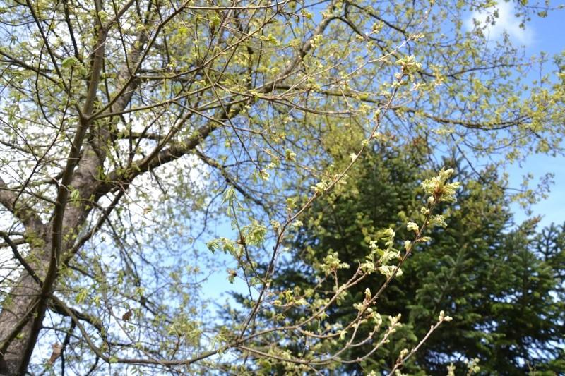 c'est aujourd'hui le printemps!!! Dsc_0528