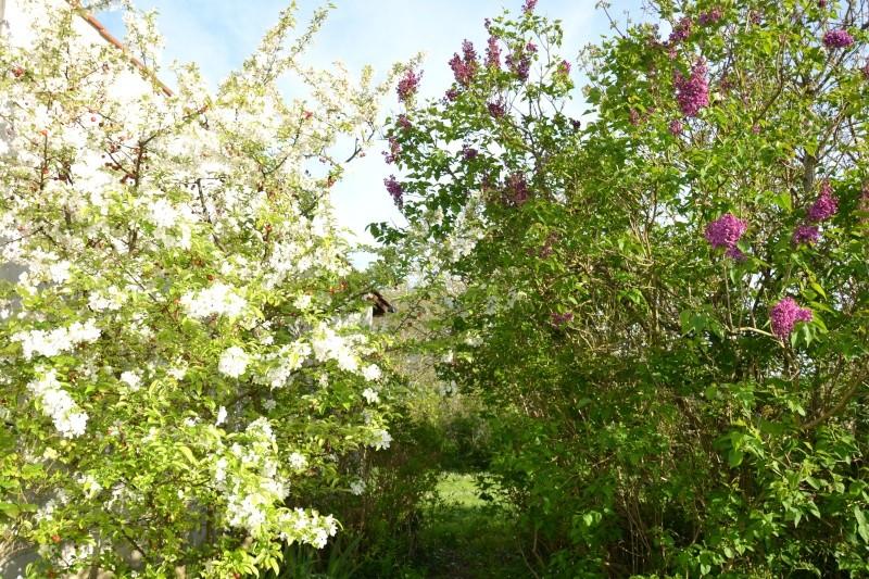 c'est aujourd'hui le printemps!!! Dsc_0529