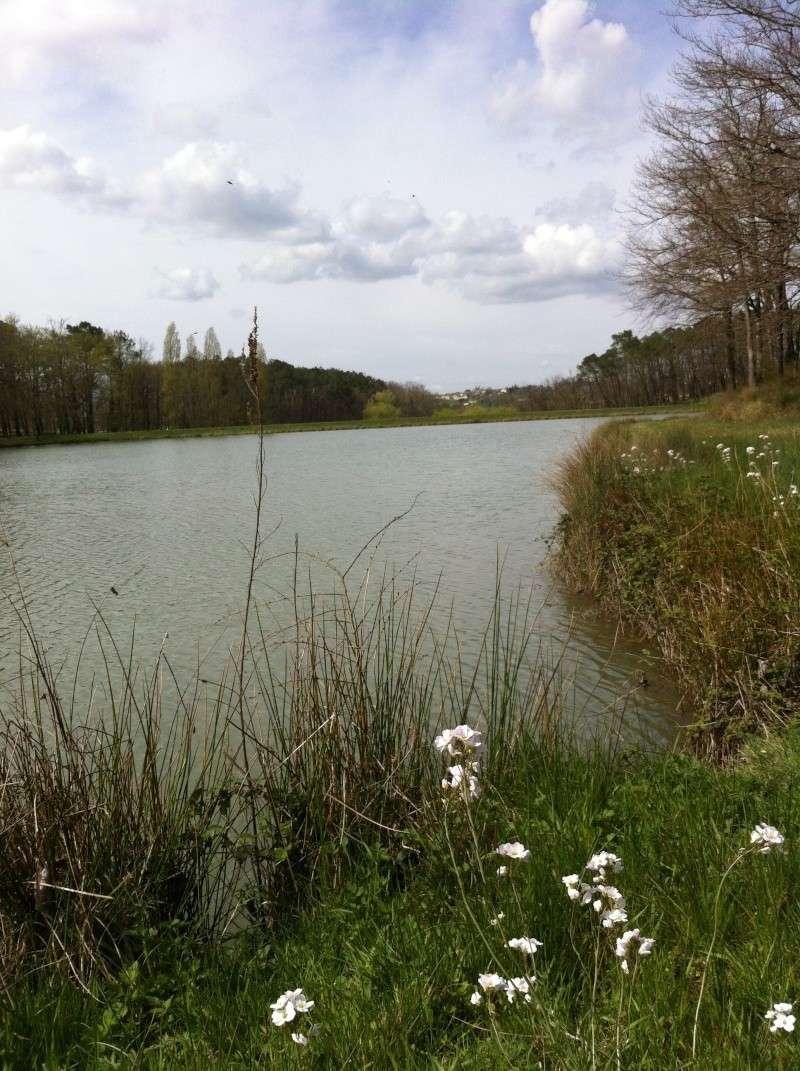 Baignade au lac de Gurson (24) Img_2310