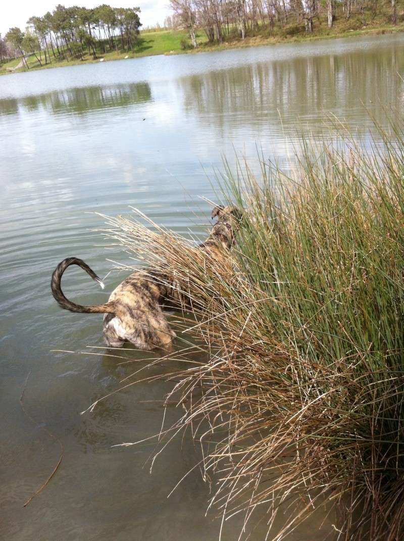 Baignade au lac de Gurson (24) Img_2318
