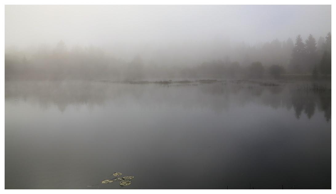 Brume au lac Brume010