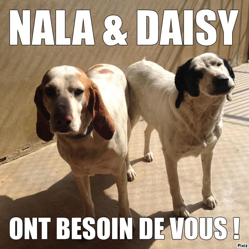 NALA et DAYSY - Porcelaine âgées de 7 et 6 ans - asso Eden Valley (dept 39) Nala_e10