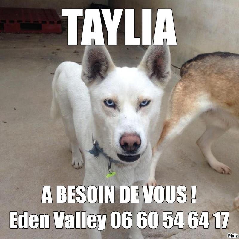 BIRD 8  ans (aveugle) et TAYLIA 2 ans - huskys - Asso Eden Valley (39) Taylia11