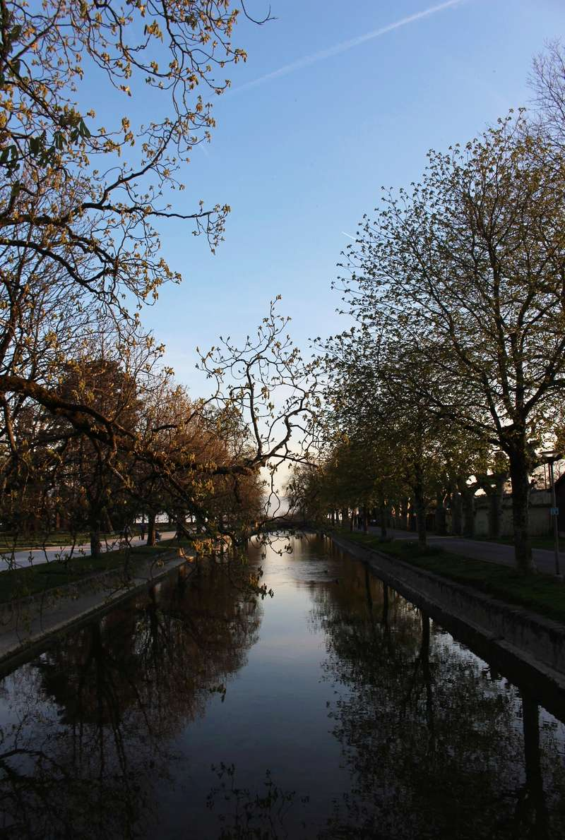 photo challenge avril Trees10