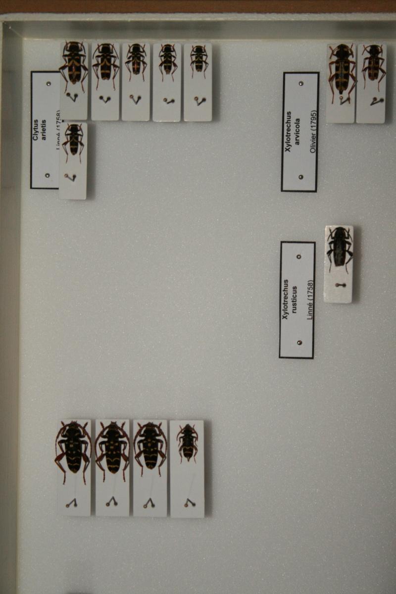 Présentation des collections Entomologiques - Page 6 00710