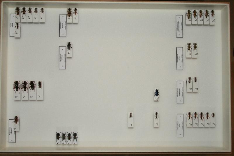 Présentation des collections Entomologiques - Page 6 01010