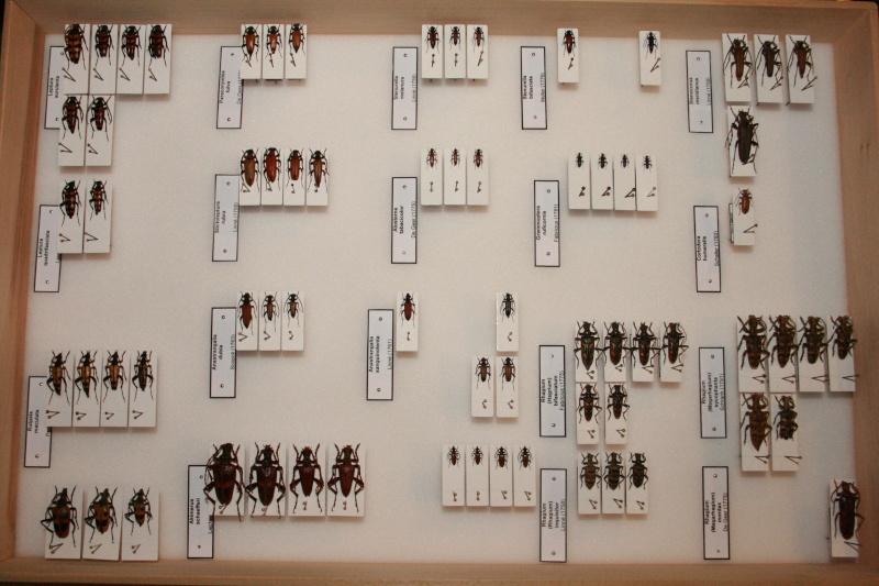 Présentation des collections Entomologiques - Page 6 01110