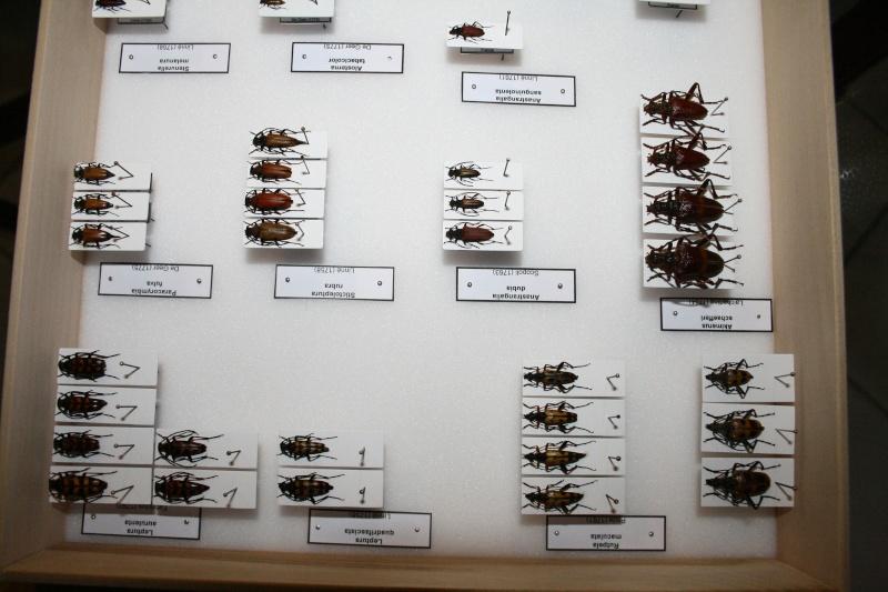 Présentation des collections Entomologiques - Page 6 01510