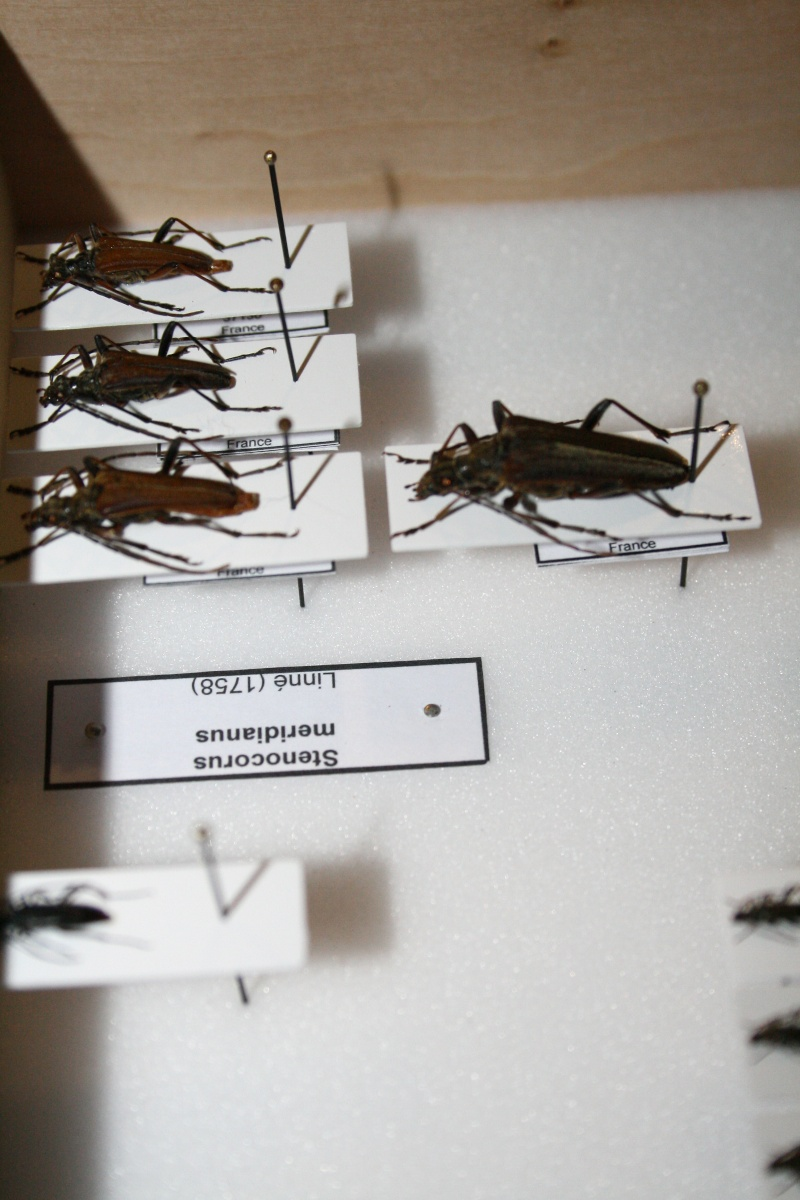 Présentation des collections Entomologiques - Page 6 01710