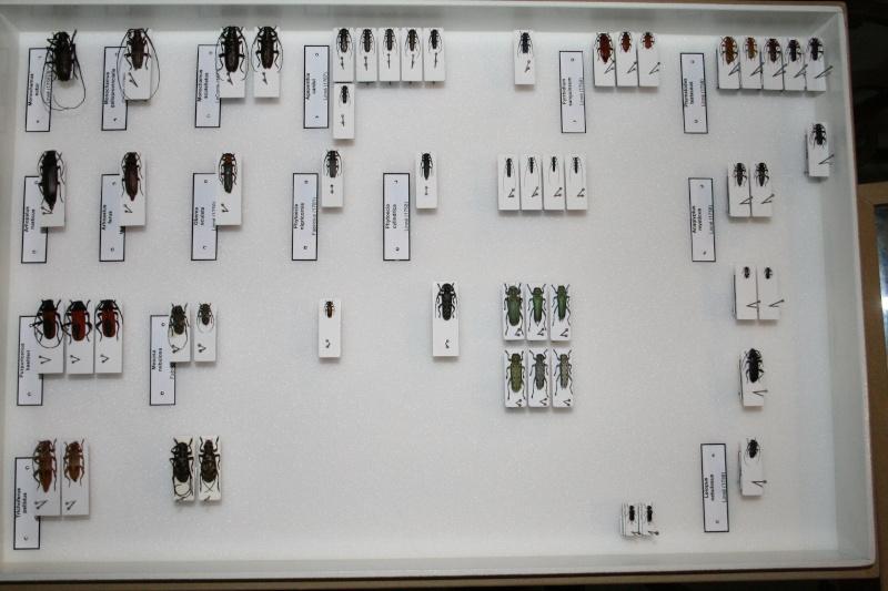 Présentation des collections Entomologiques - Page 6 01910