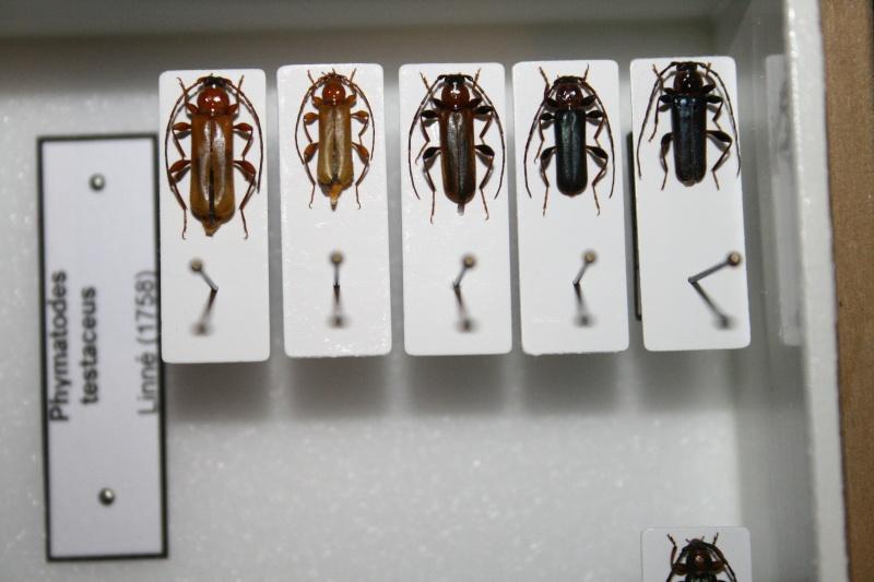 Présentation des collections Entomologiques - Page 6 02010