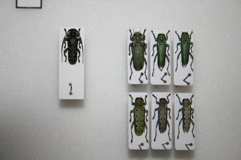 Présentation des collections Entomologiques - Page 6 02210