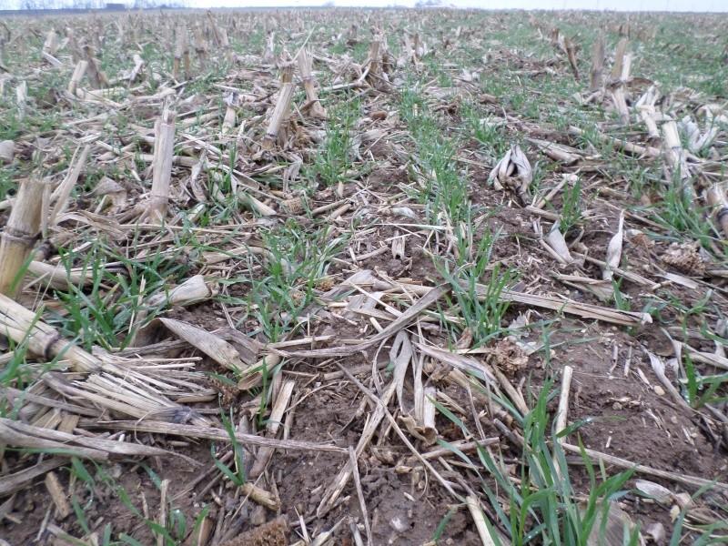 semis de blé 2013-2014 - Page 20 Sam_0112