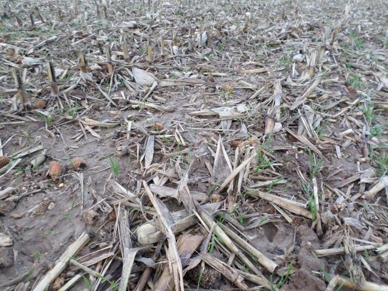 semis de blé 2013-2014 - Page 20 Sam_0113
